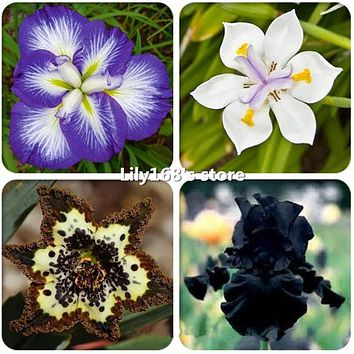 20pcs iris seeds,rare iris bonsai flower seeds,24 colours Heirloom Iris Tectorum Perennial Flower Seeds plant for home garden