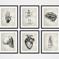 Anatomy Art Prints, Hand, Heart, Foot, Brain, Skull, Skeletal Human Anatomy Set of Six 5x7, 8X10, 11x14 Medical Science Doctor Decor