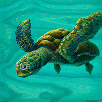Aeko Sea Turtle Painting by Emily Brantley - Aeko Sea Turtle Fine Art Prints and Posters for Sale
