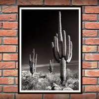 Cactus, Botanical Print, Garden Art, Cactus Print Art, Desert Photography, Arizona, Cacti Print, Cactus Decor, Southwestern Art, Nature *88*
