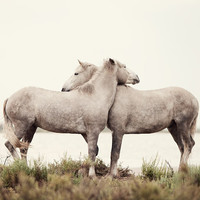 $30.00 Embrace  Nature Photograph White Horses by EyePoetryPhotography