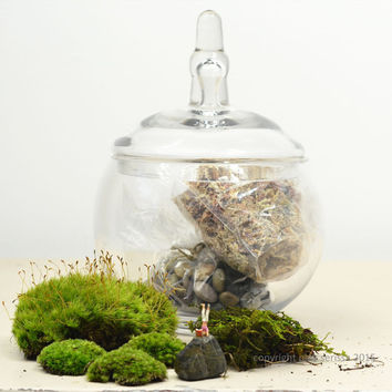 Live Moss Terrarium // Headstand // DIY kit // Glass Apothecary Jar // Home Decor // Green Gift