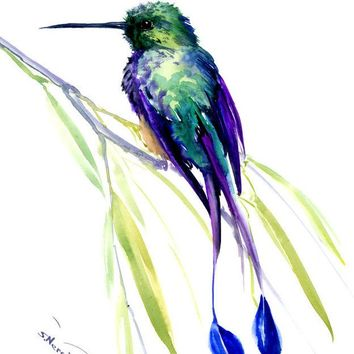 booted racket-tail hummingbird, Hummingbird, original watercolor painting, tropical birds birds and flowers, turquoise  blue green