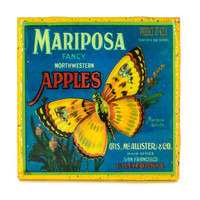 * Stella Divina * | Handmade Coaster Mariposa Brand - Vintage Citrus Crate Label - Handmade Recycled Tile Coaster | Online Store Powered by Storenvy