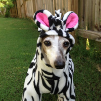 Zebra Dog Costume - Halloween costume - Italian Greyhound, Chinese Crested, etc