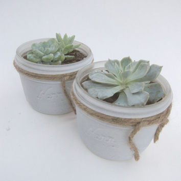 Potted Succulent in White 1/2 Pint Mason Jars Multiple Sizes Wrapped in Twine Rustic Vintage Country Wedding Favors