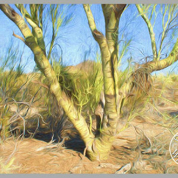 Tree Oil Painting Photography Print Fine Art Wall Art Decor Southwest Art Arizona Desert Art Palo Verde Tree