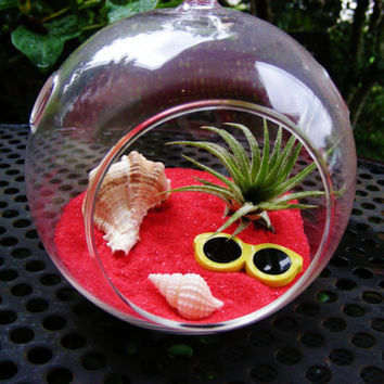 Sunglasses on the Beach Terrarium - Glass Globe Hanging Terrarium Kit w Tillandsia Air Plant - Gift Idea - Housewarming - Fun