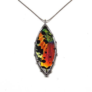 Colorful Sunset Moth Necklace: Simple and Elegant Real Butterfly Jewelry
