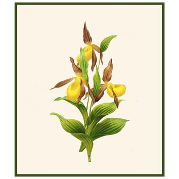 Lady Slipper Orchid Flowers Inspired by Pierre-Joseph Redoute Counted Cross Stitch Pattern