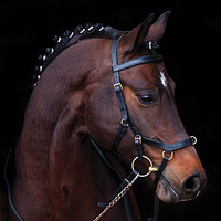 Micklem Multibridle