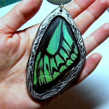 Glass Real Butterfly Wing Jewelry - O Priamus Poseidon