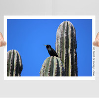 Saguaro Cactus and Wildlife Photography/ OPEN EDITION prints / Desert plants and Bird Photography / Blackbird, Green, Blue, Black