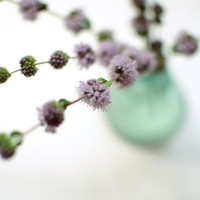 Still Life Photography pale purple photograph vintage by honeytree