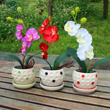 22 varieties of Bonsai pot Flowers Seeds Senior Ornamental Orchid home garden Plants Indoor 200pcs Phalaenopsis Orchid Seed