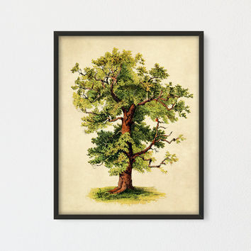 Oak Tree Printable Art, Green Tree Botanical Print, Tree Poster, Vintage Tree Art Encyclopedia Book Plate, Farmhouse Decor, Cottage Wall Art