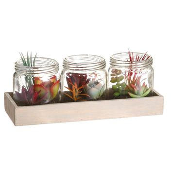 Set of 3 Artificial Mixed Succulent Plants in Glass Jars on Wooden Display Tray 9.25""