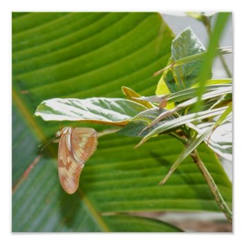 Butterfly on Plant Poster