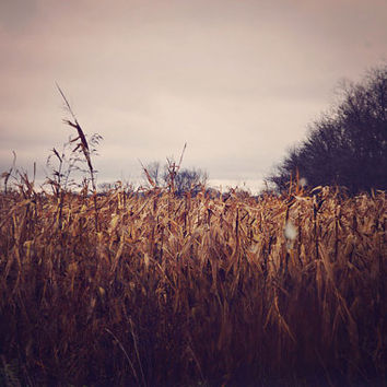SALE Rustic Photography, Fall Landscape, Wheat, Warm Colors, Nature, Farm, Field, Country Decor, Autumn, Peach, Gray, Minimal