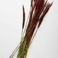 Dried Plume Reed Bouquet