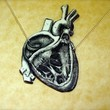 dissected anatomical human heart necklace by TheTamerlane on Etsy