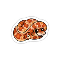 Corn Snake by yamashta