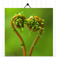 Fern Fronds 10X10 Photograph Perfect Valentine Print Heart Photography Prints Nature Lover Woodland Scene Flower Botany Print