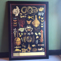Curiousity Cabinet Print with Frame