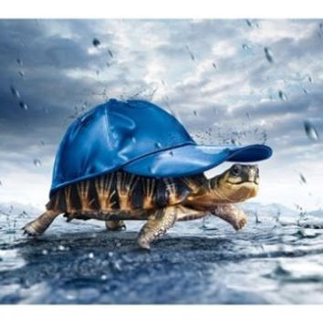 TURTLE shell in BASEBALL cap WALKING in the rain POSTER 24X36 funny COMICAL