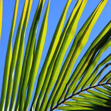 Beach Photography, Palm Tree Frond, Turquoise Sky Palm.