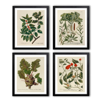 Set of 4. Digital Instant Download Antique Botanical Illustrations 1640-1900 poster set, Botanical Vintage Art Prints, pictures set *20.11*
