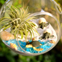 Sea Turtle Terrarium Kit ~ Glass Hanging or Sitting Terrarium with Air Plant ~ 2 Hatching Sea Turtles ~ 1 Sea Turtle ~ Beach Decor ~ Gift