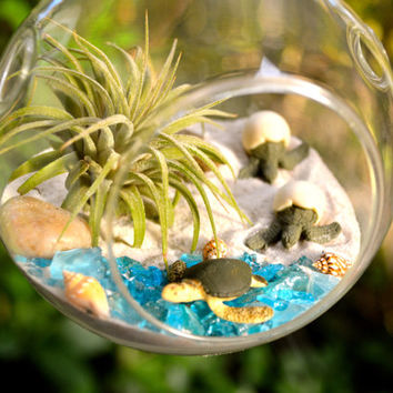 Sea Turtle Terrarium Kit ~ Small Air Plant Terrarium Kits ~ 2 Hatching Sea Turtles ~ 1 Sea Turtle ~ Coastal Living Beach Decor ~ Beach Gift