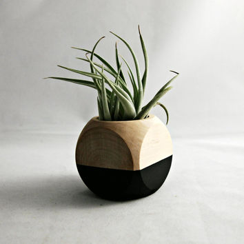 Geometric Air Plant Cube Planter With Tillandsia Leonamiana // Black - Natural Wood