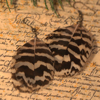 Stripe barbed brown and cream peacock feather earrings