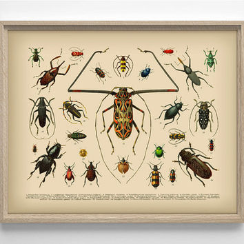 Vintage Insect Illustration 2, Unique College Dorm Room, Indie, Hipster, Simplistic Home, Nursery Print, Wedding Gift, Giclee Art Print