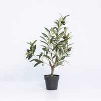 19 IN OLIVE PLANT