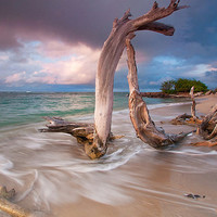 Caribbean Beach Sunset Limited Edition Photo Print  Driftwood Ocean Sea Tropical St Kitts and Nevis Travel Photography Fine Art Wall Decor
