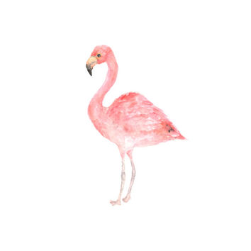 Watercolor bird, bird painting, watercolor painting, bird art, watercolor animals, pink flamingo, pink, flamingo print, tropical decor, 5X7