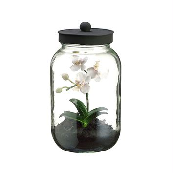 "11.25"" Artificial Mini White & Pink Phalaenopsis Orchid Silk Flower in Glass Terrarium Jar with Lid"