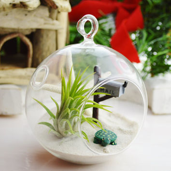 You've Got Mail - MailBox Terrarium Glass Globe Terrarium Kit w Tillandsia  Air Plant - Turtle - Home Decor - White Starfish - Gift