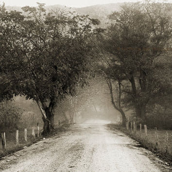 Black and White Photography / landscape / rustic /  rural / country road / monochromatic / fog / Sparks Lane / 16 x 10 print