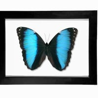 Real Morpho Achilles Mounted Display