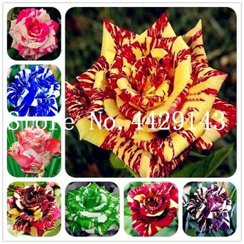 Bonsai Roses 200 Pcs/bag Germany Rare Dragon Rose Bonsai Flowering Plants For Diy Home Garden & Balcony