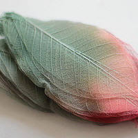 4 inches red to green dried rubber leaves - pressed skeletal mulberry leaves - natural crafting supply FREE SHIPPING