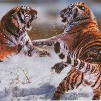 Siberian Tigers Big Cat Fight Poster 24x36