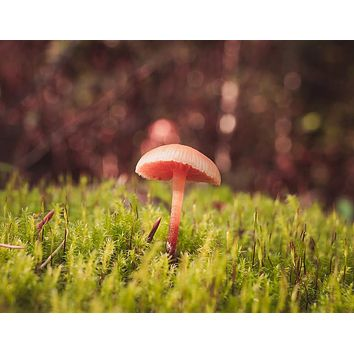 Tiny Mushroom in Moss Wall Art Print - Many Sizes