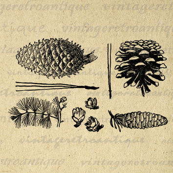 Digital Pine Cone Collection Image Printable Winter Graphic Collage Sheet Set Download Vintage Clip Art HQ 300dpi No.1040