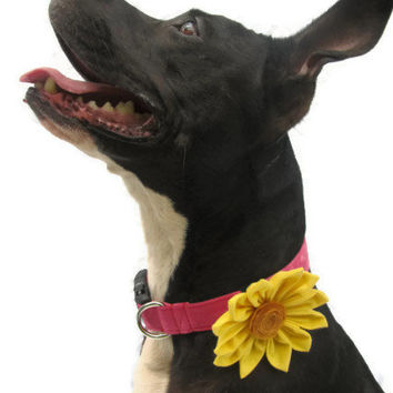 Designer Dog collar and flower - hand dyed dog collar with black buckle and yellow daisy flower - Pink dog collar