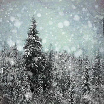 Snowflake Photography, Winter Photograph, Black and Blue Decor, Night Picture, Ski Lodge Decor, Forest Photo